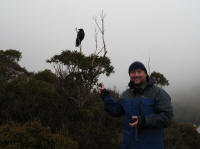 Matthew with forest raven