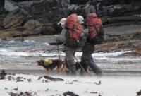 Walkers with dogs at South Cape Rivulet