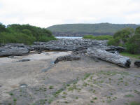 Tree trunks washed up at Pieman Heads